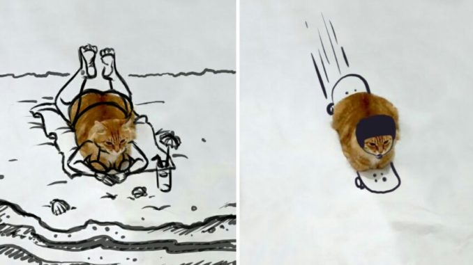 10 Meme Saat Kucing Duduk Di Permukaan Putih Dan Di Edit
